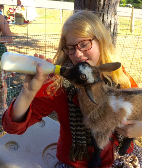 Nigerian Dwarf Goats at the Spencer Creek Growers Market