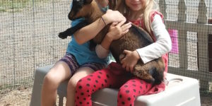 Goat kids will be part of the entertainment on Opening Day at the Spencer Creek Growers Market at the Grange