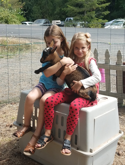Goat kids are often part of the entertainment on Opening Day at the Spencer Creek Growers Market at the Grange